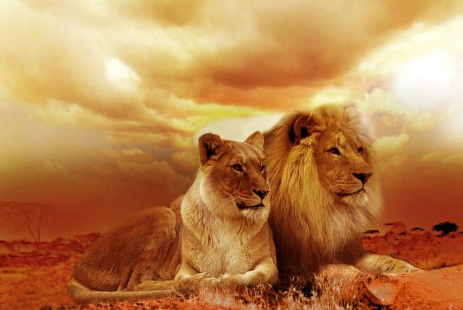 lion-577104_960_720