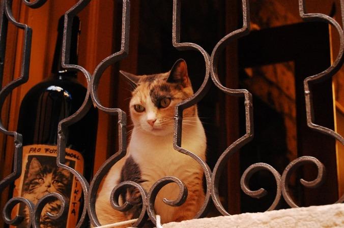 cat-302605_960_720